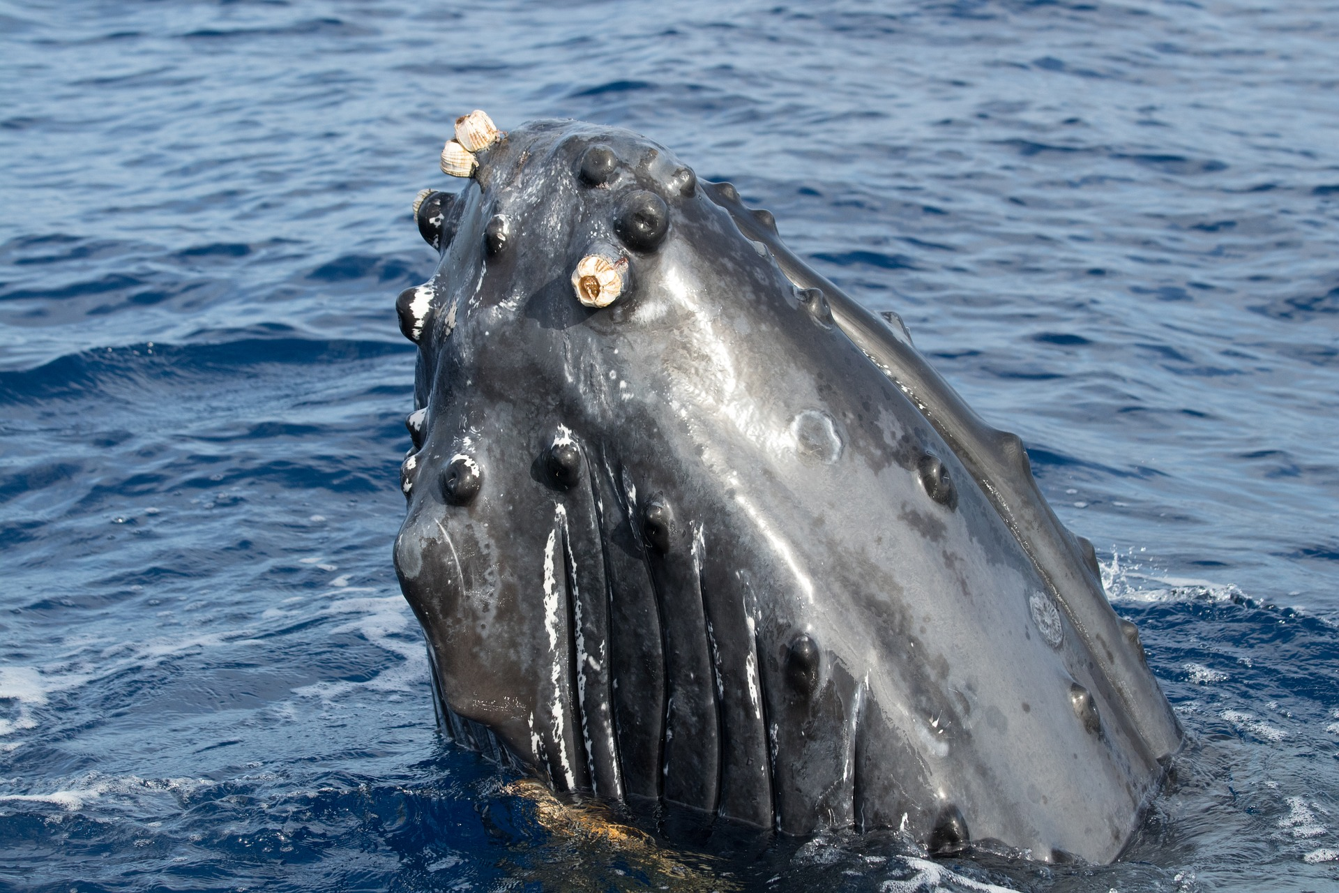 safari-cetace-observation-baleines-reunion