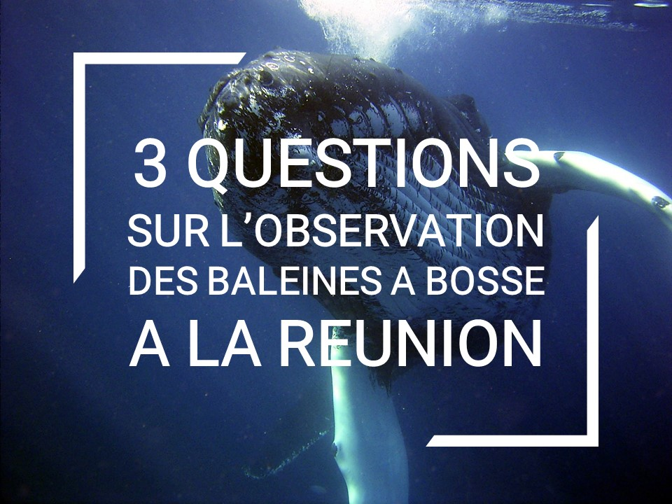 questions-observation-baleines-reunion